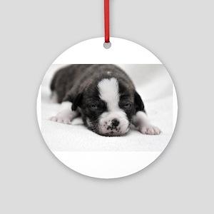 Newborn Puppy Ornament (Round)