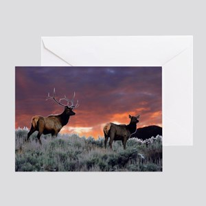 Elk at sunset Greeting Card
