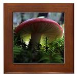 Red Mushroom in Forest Framed Tile