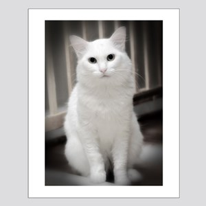 White Cat Small Poster