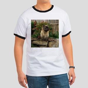 Cairn Terrier Ringer T