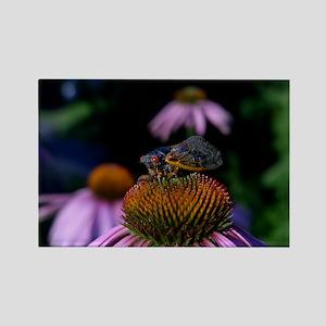 Cicada Rectangle Magnet