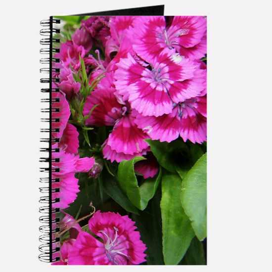 Sweet Williams / Dianthus Journal / Notebook
