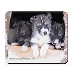 MCK Siberian Husky Puppies Mousepad