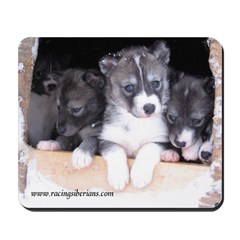 MCK Siberian Husky Puppies Mousepad