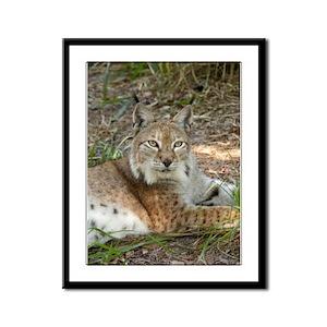 Siberian Lynx Framed Panel Print