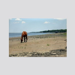 Cumberland Island Horse Rectangle Magnet