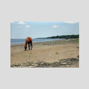 Cumberland Island Horse Rectangle Magnet