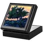 Torrey Pine Tree La Jolla Keepsake Box