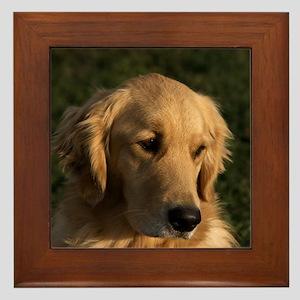 Golden Retriever Head Framed Tile