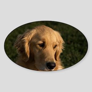 Golden Retriever Head Sticker (Oval)