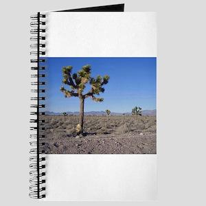 Groom Lake Road Joshua Tree Journal