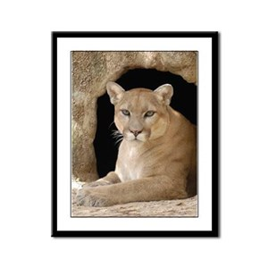 Cougar Framed Panel Print