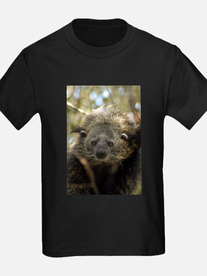 Bearcat T