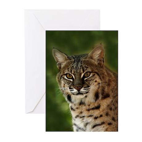 Bobcat Greeting Cards (Pk of 10)