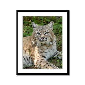 Bobcat Framed Panel Print