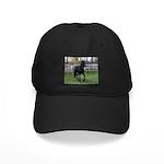 Baron Trot Black Cap
