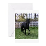 Baron Trot Greeting Cards (Pk of 10)