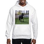 Baron Trot Hooded Sweatshirt