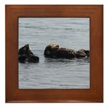 Sea Otters with Baby Framed Tile