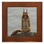 California Ground Squirrel Framed Tile