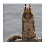 California Ground Squirrel Tile Coaster