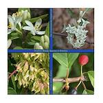 Invasive Woody Plants Tile Coaster