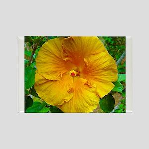 Bermuda Hibiscus Rectangle Magnet