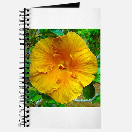 Bermuda Hibiscus Journal