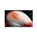 Flamingo Feathers mini poster