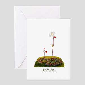 Dwarf Sundew Greeting Card