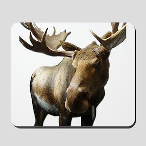 Moose Photos Mousepad