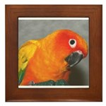 sun conure Framed Tile
