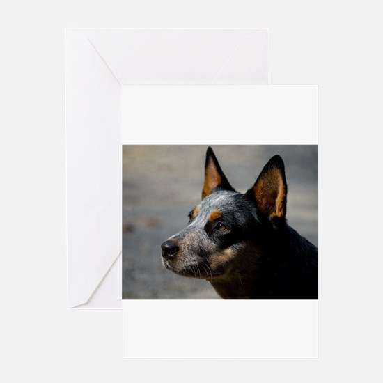 Funny Cattle dog rescue Greeting Card