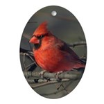 Cardinal Ornament (Oval)
