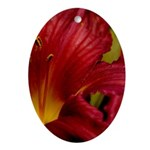 Red Lilly Ornament (Oval)