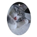 Sleeping Kitten Ornament (Oval)