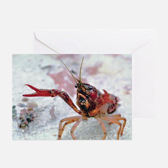 Crawfish 1 Greeting Cards (Pk of 10)