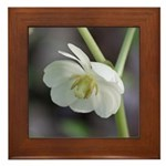 May Apple Framed Tile