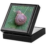 Snail Keepsake Box