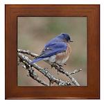 Perching Bluebird Framed Tile