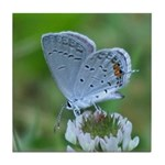 Eastern Tailed Blue Butterfly Tile Coaster
