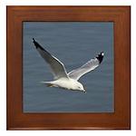 Ring-billed Gull Framed Tile