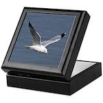 Ring-billed Gull Keepsake Box
