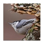 White-breasted Nuthatch Tile Coaster