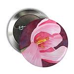 Pink Tulip 2.25