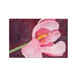 Pink Tulip Rectangle Magnet (100 pack)