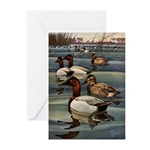Canvasback Duck Greeting Cards (Pk of 20)