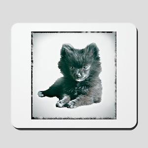 Adorable Black Pomeranian Puppy Mousepad