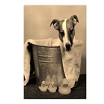 Old Fashioned JRT in Tub Postcards (Package of 8)